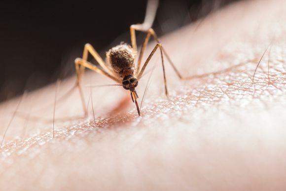 домашни средства против сърбеж от пъпки от комари