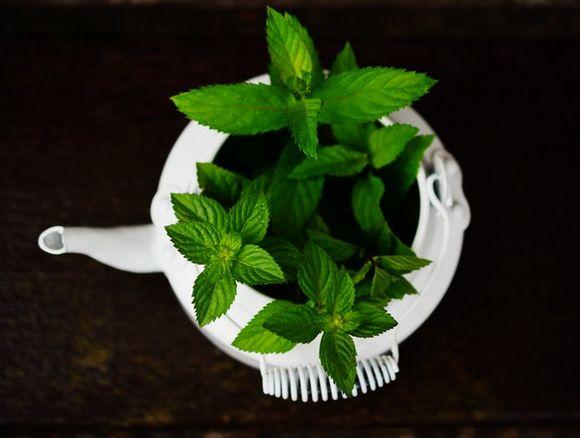 dangerous herbs