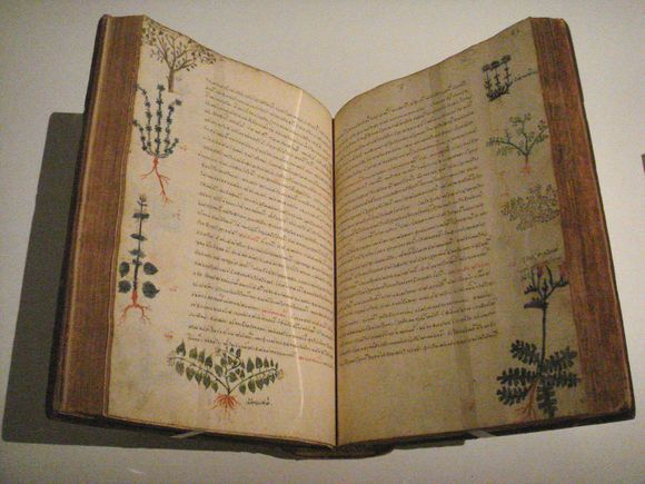 The plantain is mentioned for the first time in the book De materia medica