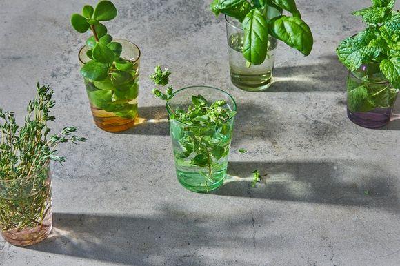 pharmacopognomy and herbs