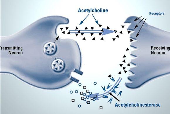 mechanism of action of galantamine
