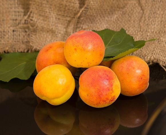 The prostate is the size of an apricot