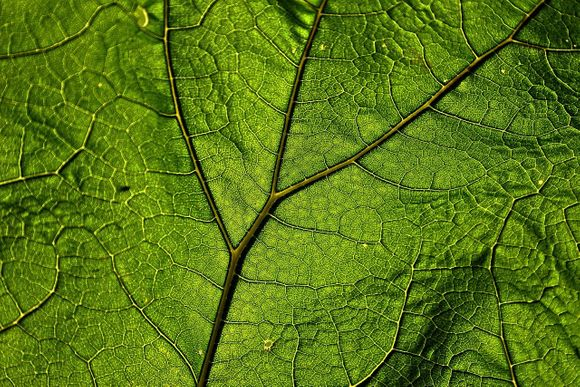 herbs antioxidants