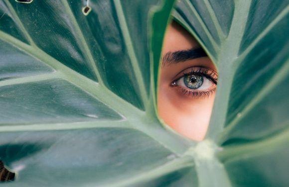herbs against glaucoma