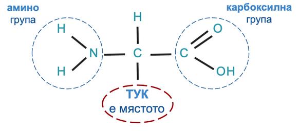 General formula of alpha-amino acids