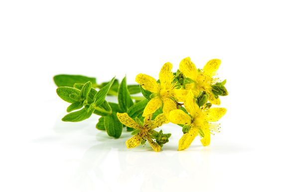 Жлези на жълтия кантарион