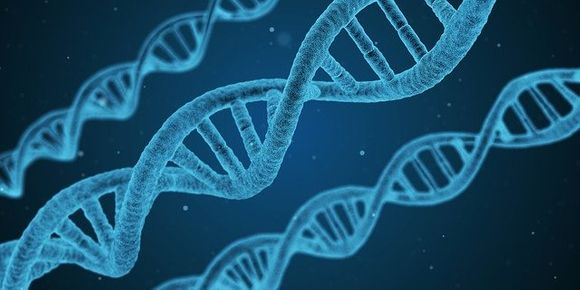 Genetics plays an important role in the development of multiple sclerosis