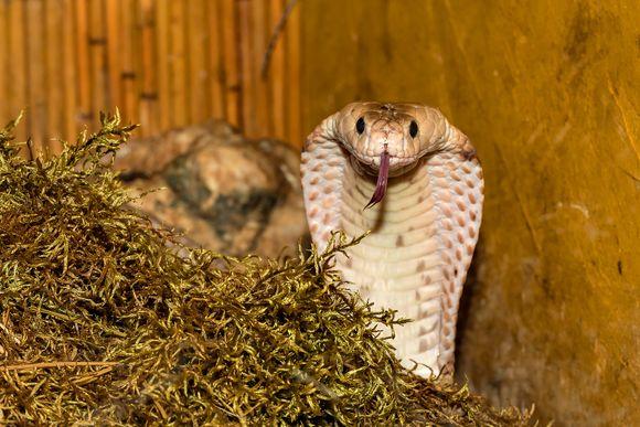 medicines with snake venom