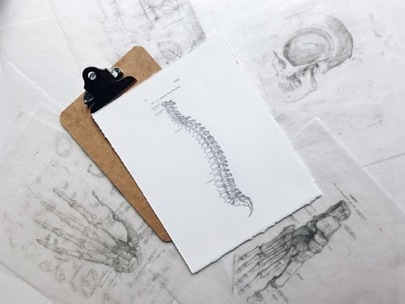The spine has normal curves