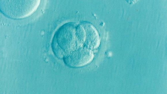 имплантационно кървене от имплантацията на ембриона, зародиша