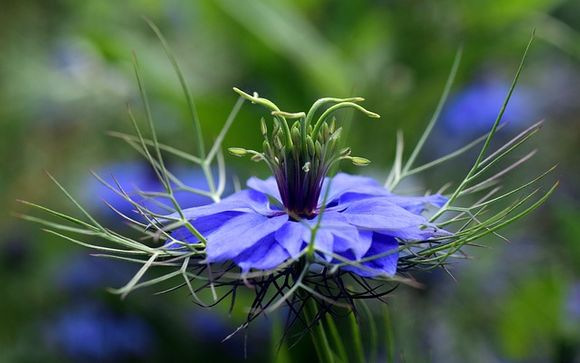 Black cumin Nigella sativa against multiple sclerosis