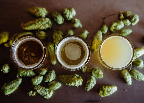 health benefits of hops and beer