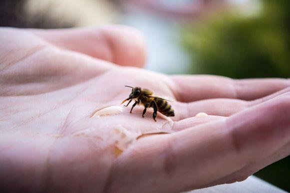 пчелна отрова против ревматоиден артрит