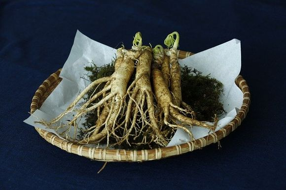 Asian ginseng Panax ginseng against multiple sclerosis