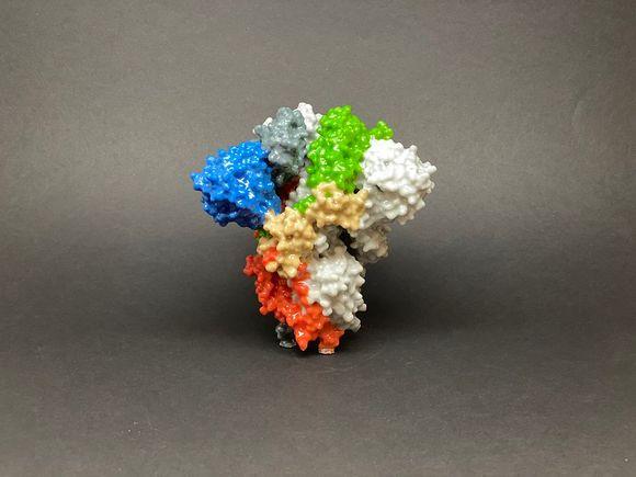 Макет на спайк протеина на коронавирус SARS-CoV-2, COVID-19