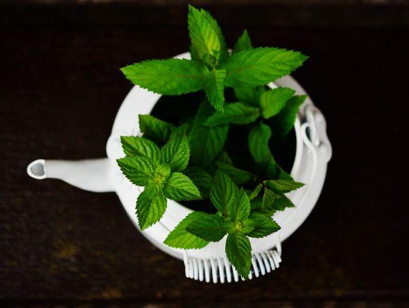 инхалация с мента, розмарин, чаено дърво, евкалипт, лайка