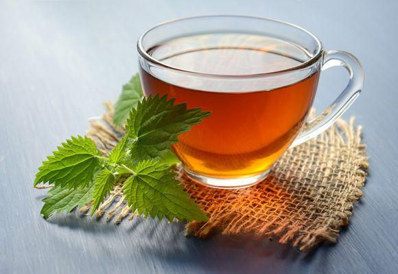 Medicinal properties of nettle