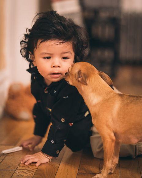 домашните любимци предпазват от алергии при децата