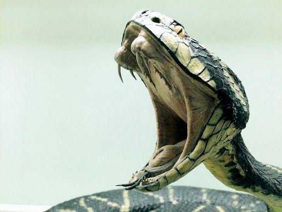 treatment with snake venom