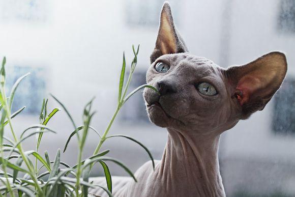 билки и подправки, които са вредни за котки и кучета